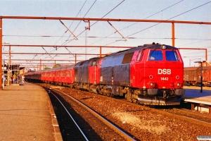 DSB MZ 1442+MZ 1449 med RØ 2473 Ro-Næ. Roskilde 02.07.1995.